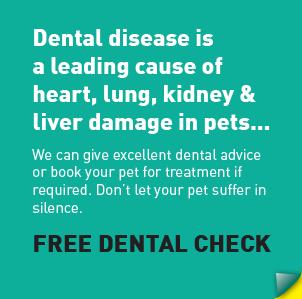 offer-dental